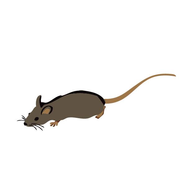 自分で出来るネズミの侵入チェックと侵入防止対策