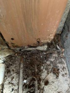 玄関化粧柱のシロアリ被害